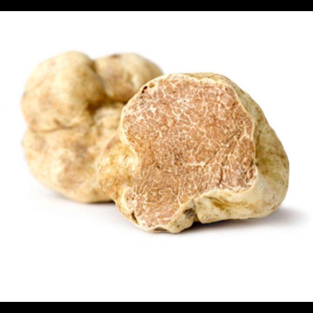 Fresh White Truffle / Alba White Truffle