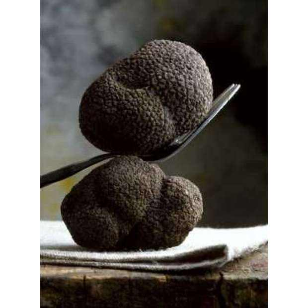 Fresh Winter Truffle / Black Winter Truffle