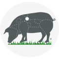 Torreon Iberico Pork Pluma